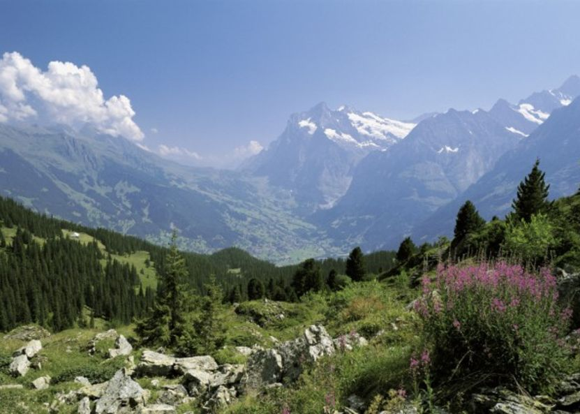 Panoramic view to the Wetterhorn and Grindelwald